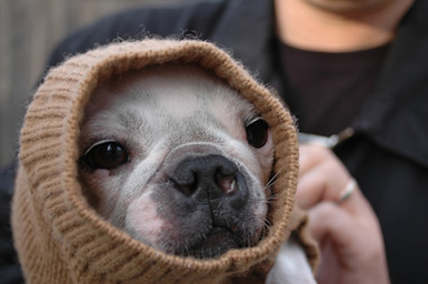 Yoda_small