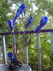 Small Blue Bottle Tree Growing on a Highland Porch