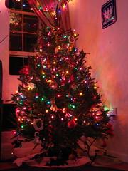 This year's tree