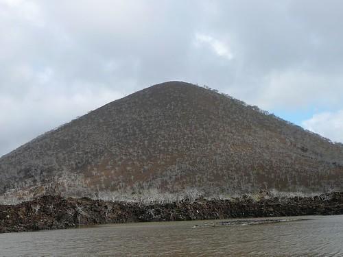 Dry Tree Hill