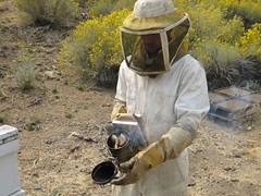 Bees Smoke