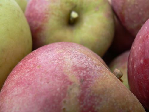 Close up apples