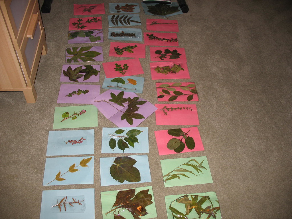plant ID 2