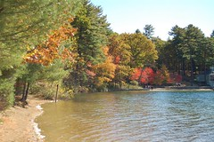 The main beach at Walden Pond