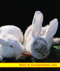 disfraz gato carnaval 2006041321_1332353715