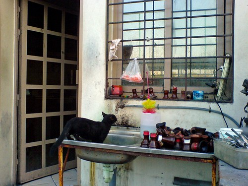 Thirsty Black Cat - Happy Halloween!