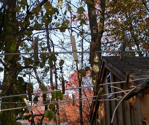 clothesline in november