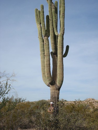zack and the giant saguaro