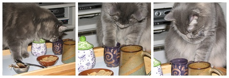 kitty tea time