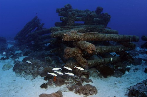 傾倒的電線桿人工魚礁