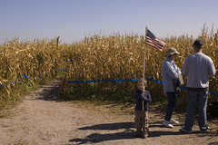 patriotic maize