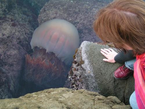 l'année des méduses