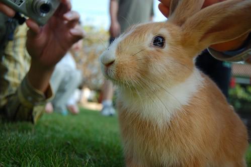 小兔(白)1