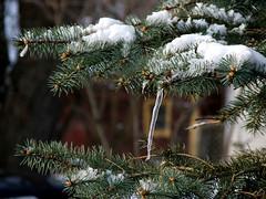 icicletree2