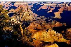 Morning Bliss, Grand Canyon National Park, Arizona photo by moonjazz