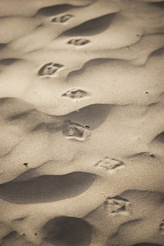 footsteps (by AndrewNg.com)