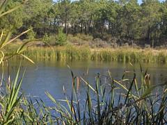 Lago Artificial de Aldeia Nova