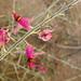 Flower (3822)