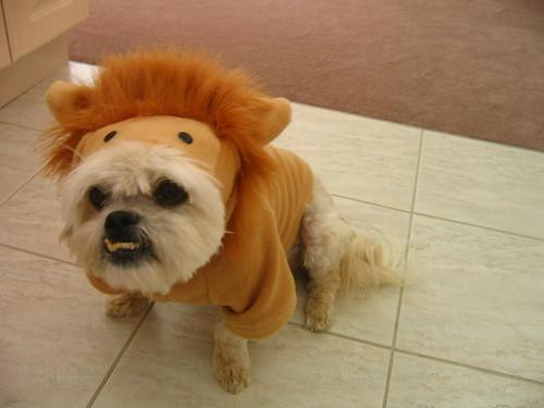 winston the friendly lion