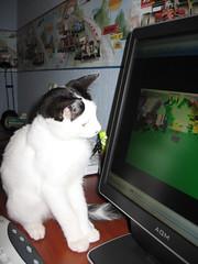 Doerak, de liefste kat ooit!