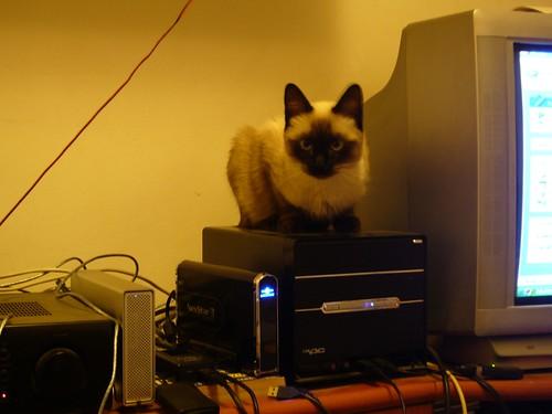 Cat & PC