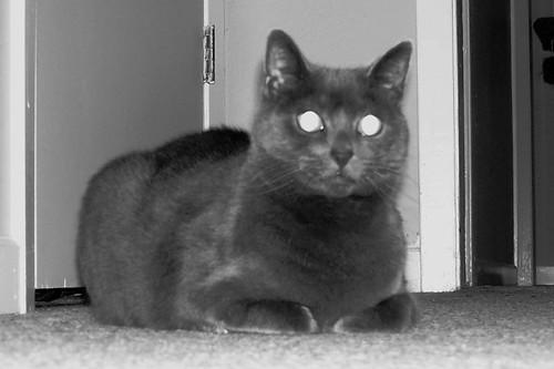 spooky kitty 2