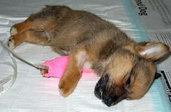 Dierenwinkel stopt verkoop puppy's