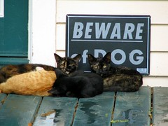Cats ignoring Beware of Dog sign