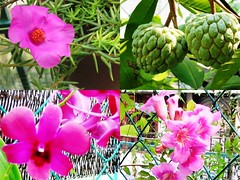 Collage of Backyard Garden's flowers and fruits