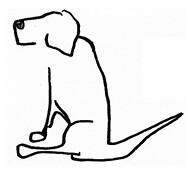 hundet