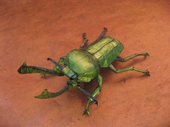 Phalacrognathus Muelleri (Rainbow Stag Beetle) photo by MABONA ORIGAMI