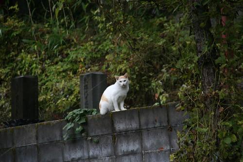 墓園裡的貓