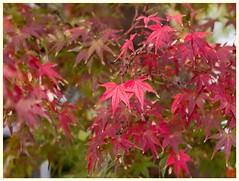 Leaves 061116 #02