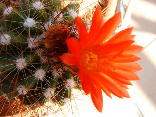 Un fiore per me