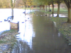 Blocked by ducks