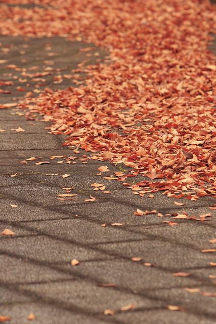 晩秋の寂寥感