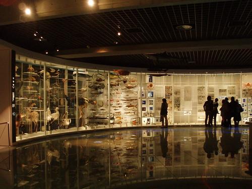 国立科学博物館20061129 012