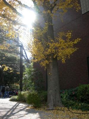 konan campus