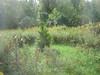 1461541406_990d2cea8f_t