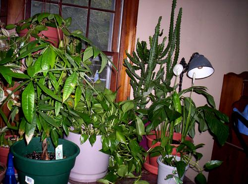 plantfamily2006_2