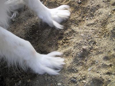 Lucy's Star Feet