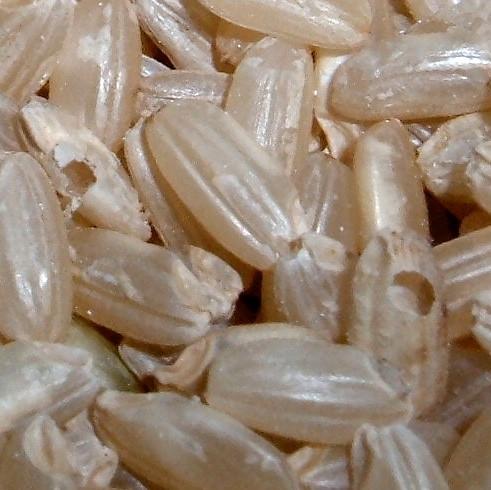 Weevil-hosting rice