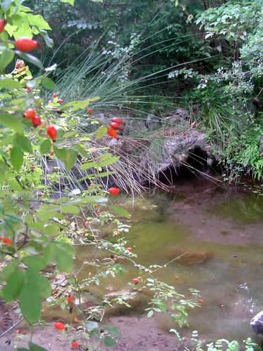 botánico de Lluc