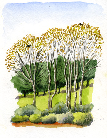 stevenagetrees