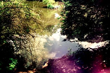 cemetery pond