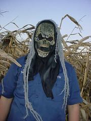 Corn Maze Terrors