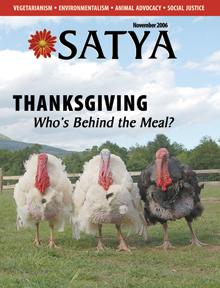 Satya - November 2006