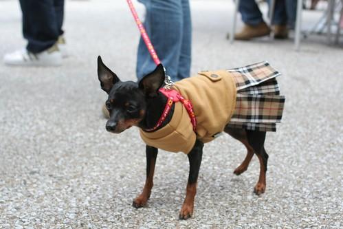 Japanese dog 4