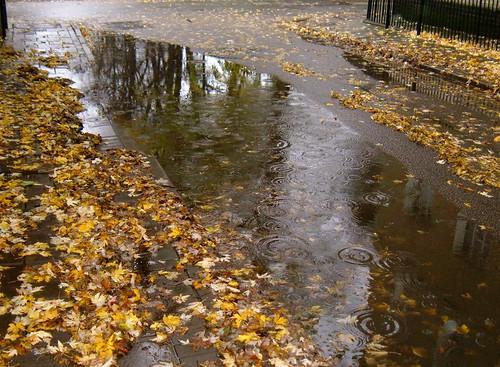 Rainy Day in Cambridge