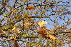 Surrey Autumn #2